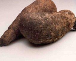Inhame: um tubérculo cheio de ritualismo e benefícios para a saúde.