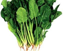 Espinafre é uma folha poderosa para sua saúde. Conheça os benefícios.