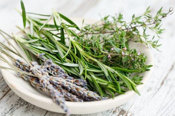 Alecrim é uma erva multifacetada reconhecida por sua notável atuação na nossa saúde