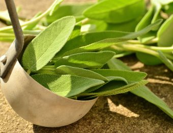 Sálvia: presente na cozinha e na medicina desde a Roma Antiga