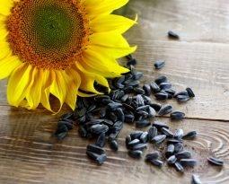 Semente de girassol é muito mais que uma base de óleo vegetal, você sabia?